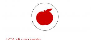 Ciclo di vita di una mela